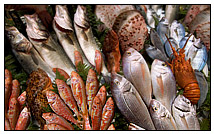 An assortment of fish and shellfish such as mussels, clams, and oysters that can be bought at The Other Brother Darryl's retail store in Otis MA or delivered by their fleet of refrigerated trucks.